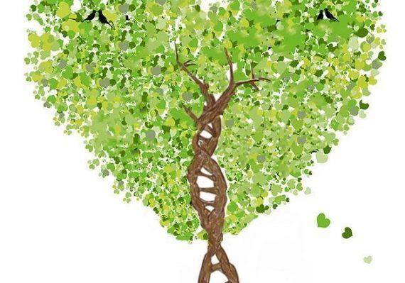 love of genealogy tree